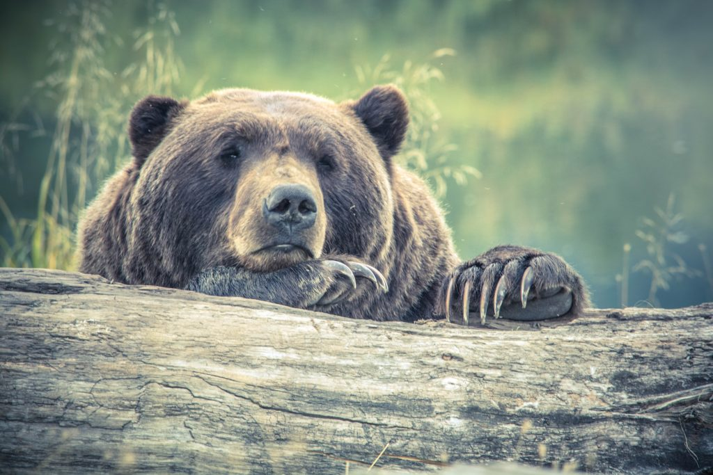 don't sabotage your portfolio bear market